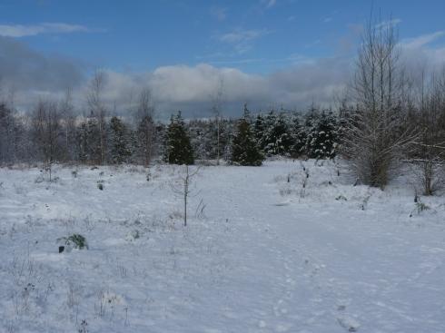 Burnt Bridge Creek trail in the snow.