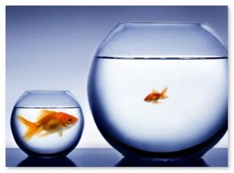 smallfish