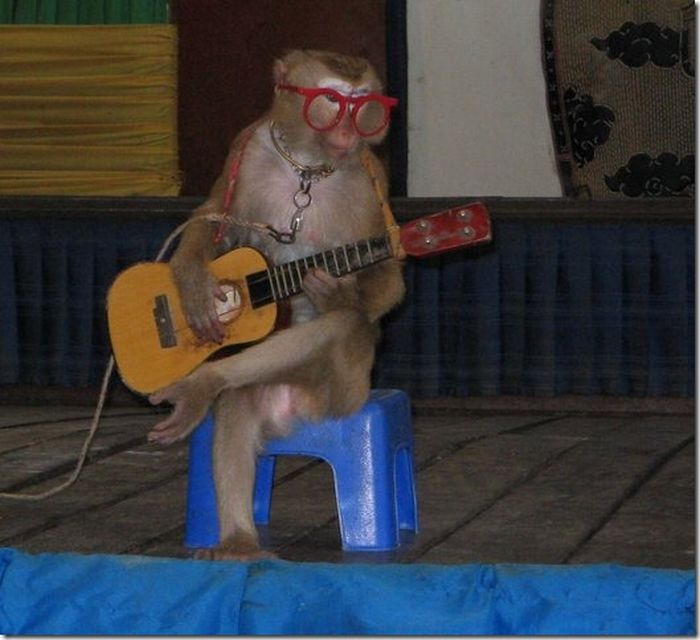 Look! It's a circus monkey with guitar! Top of the Google rankings, here I come...