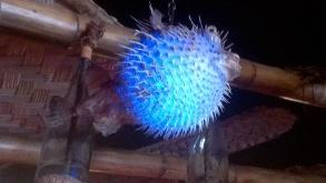 Glowing pufferfish.