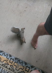 Whoa. This is one brave squirrel!