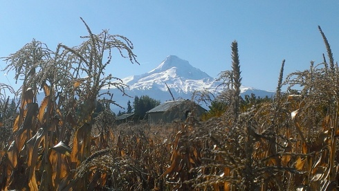 Mount Hood on a sunny Autumn afternoon.