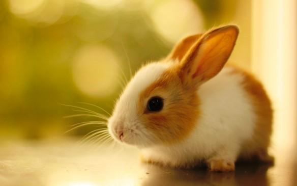 Rabbit-Nature-Very-Cute-HD-1024x640