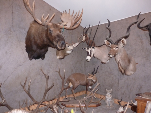 Tara's uncle has his living room decorated with animals he has killed.