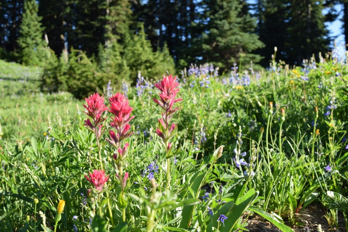 The wildflowers at Mount Rainier were on point!